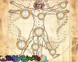 پیرترین اندام بدن انسان چیست ؟