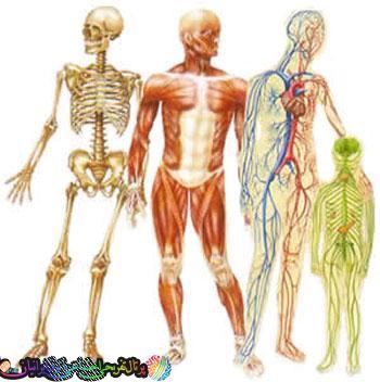 15 راز شگفت انگیز بدن انسان!